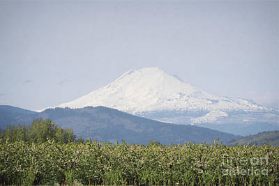 Photograph - Oregon Mount Hood Orchard Farm Landscape by Andrea Hazel Ihlefeld