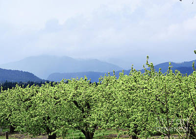 Photograph - Oregon Mountain Orchard Landscape by Andrea Hazel Ihlefeld