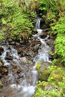 Photograph - Oregon Mountain Waterfall Stream by Andrea Hazel Ihlefeld