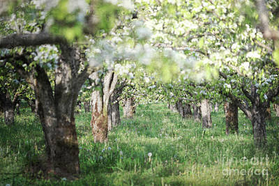 Photograph - Oregon Pacific Northwest Orchard Landscape by Andrea Hazel Ihlefeld