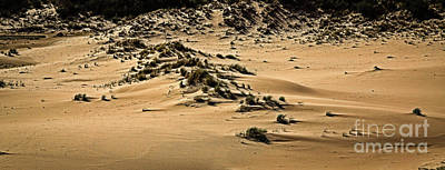 Photograph - Oregon Sand Dunes National Park by Jon Burch Photography