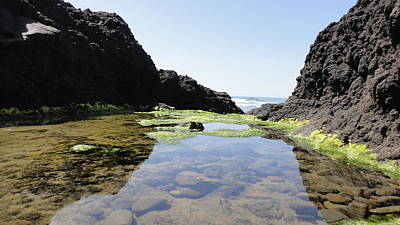 Photograph - Oregon Tidal Pool by John Lyes