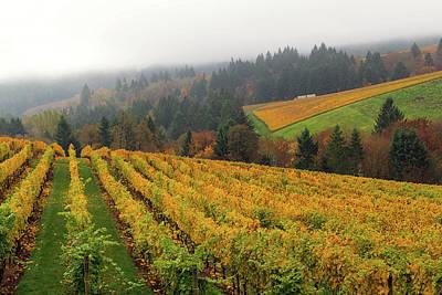 Photograph - Oregon Vineyard In Fall Season by David Gn