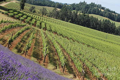 Photograph - Oregon Vineyard by Theresa Willingham