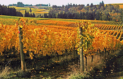 Oregon Wine Country Art Print by Margaret Hood