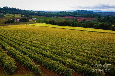 Photograph - Oregon Wine by Jon Burch Photography