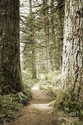 Photograph - Oregon Woodland Forest Trail by Andrea Hazel Ihlefeld