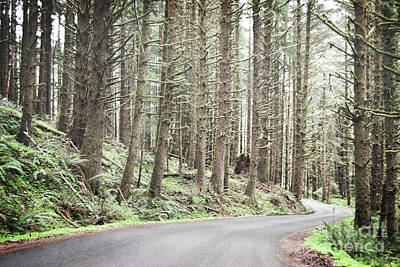 Photograph - Oregon Woodland Mountain Road Landscape by Andrea Hazel Ihlefeld