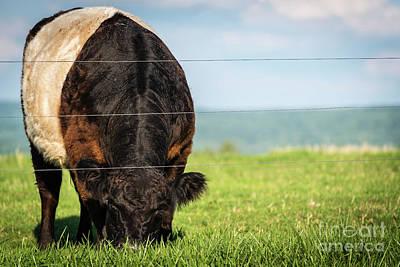 Photograph - Oreo Cow by Joann Long