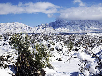 Cactus Photograph - Winter's Blanket Organ Mountains by Kurt Van Wagner