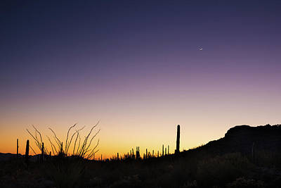 Organ Pipes Photograph - Organ Pipe Cactus National Monument Sunset by Steve Gadomski