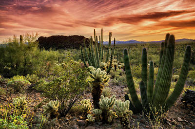 Photograph - Organ Pipe Sunset  by Saija Lehtonen