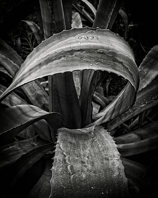 Photograph - Organic Curve by Alan Raasch