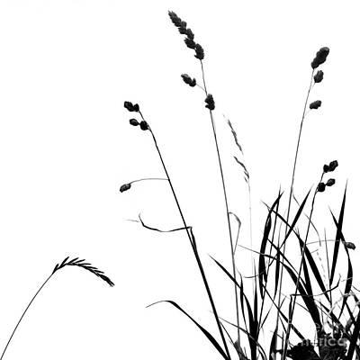 Photograph - Organic Enhancements 10 by Paul Davenport