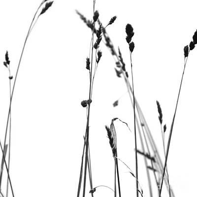 Photograph - Organic Enhancements 2 by Paul Davenport