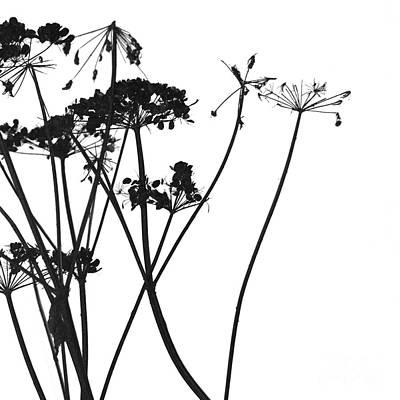 Photograph - Organic Enhancements 4 by Paul Davenport