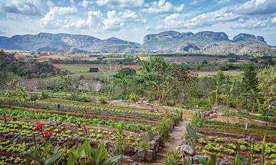 Photograph - Organic Farm Vinales Valley Cuba by Joan Carroll