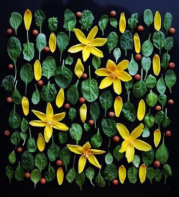 Photograph - Organic Greens by Sarah Phillips
