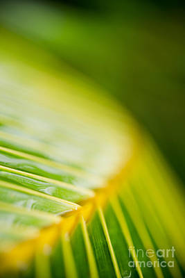Photograph - Organic Palm Frond Macro Maui Hawaii by Sharon Mau