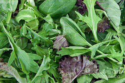 Romaine Lettuce Photograph - Organic Spring Mix Salad Mix by Inga Spence