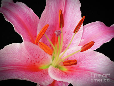 Photograph - Oriental Beauty by Sue Melvin