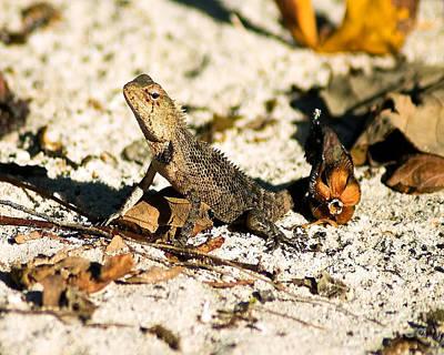 Oriental Garden Lizard A Dragon In The Maldives Art Print by Chris Smith