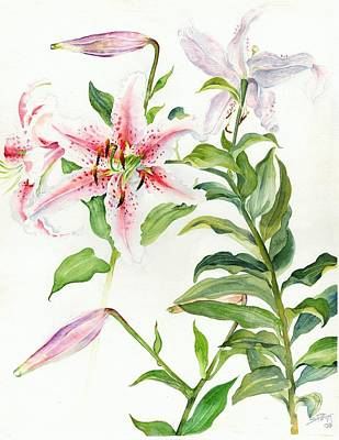 Painting - Oriental Lily Mona Lisa Liliaceae by Sandra Phryce-Jones