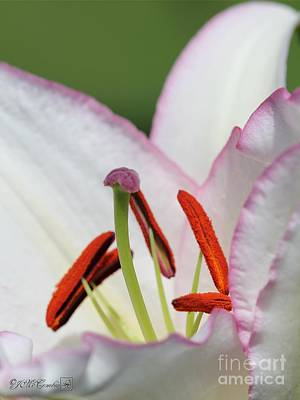 Photograph - Oriental Lily Named Millesimo by J McCombie