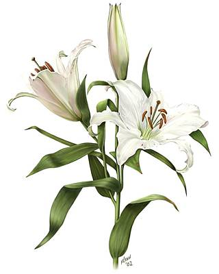 Painting - Oriental Lily Siberia by Artellus Artworks