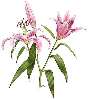Painting - Oriental Lily Stargazer by Artellus Artworks