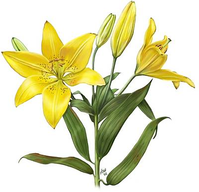 Painting - Oriental Lily Yellow by Artellus Artworks