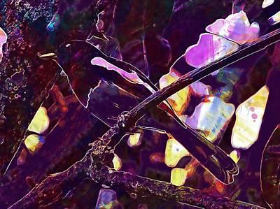 Magpies Digital Art - Oriental Magpie Robin Male  by PixBreak Art