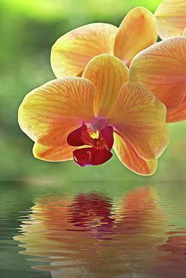 Zen Artwork Photograph - Oriental Orchid Spa by Gill Billington