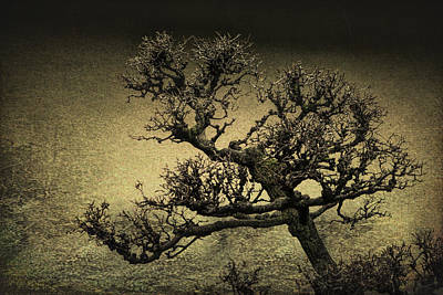 Wall Art - Photograph - Oriental Tree by Michel Emery