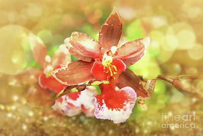 Original Orchid Original