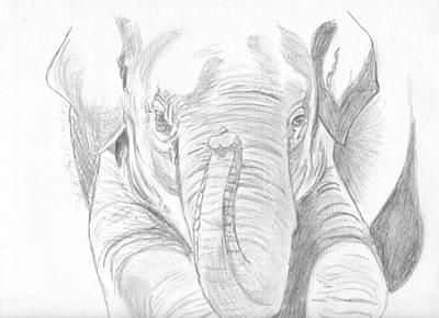 Original Pencil Sketch Elephant Art Print by Shannon Ivins