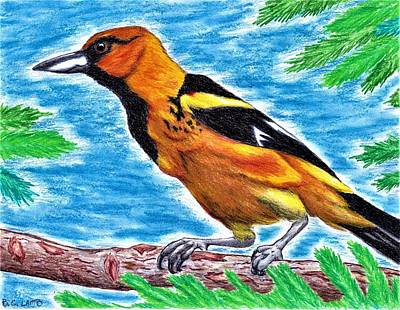 Oriole Drawing - Oriole by Bryant Lamb