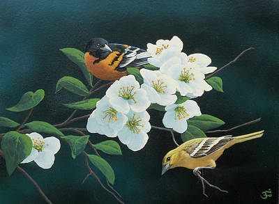 Oriole Painting - Orioles by Mark Mittlesteadt