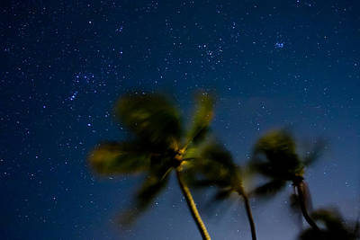 Orion And Windswept Palms Original by Adam Pender