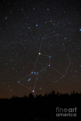 Betelgeuse Photograph - Orion Constellation by Larry Landolfi