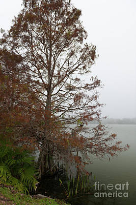 Photograph - Fog Over Lake Highland by Dale Powell