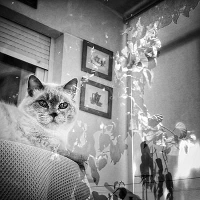 Reflection Wall Art - Photograph - Orlando The Cat by Rafa Rivas