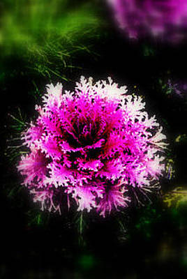 Photograph - Ornamental Cabbage by Lynn Bawden
