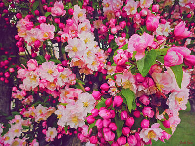 Photograph - Ornamental Crabapple Blossoms 2 by Anna Louise