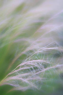 Photograph - Ornamental Garden Grasses Blowing In The Wind by Barbara Rogers Nature Inspired Art Photography