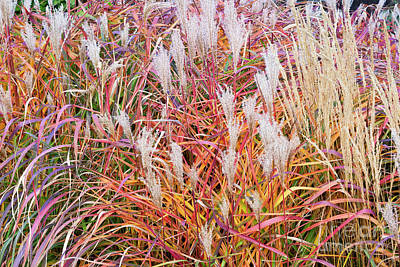 Photograph - Ornamental Grasses by Alan L Graham