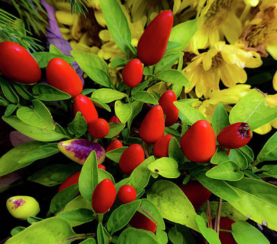 Lucille Ball - Ornamental Peppers  by Scott Staley