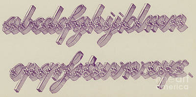 Typography Drawing - Ornamental Riband, Small  by English School