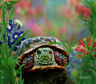 Ornate Box Turtle Art Print