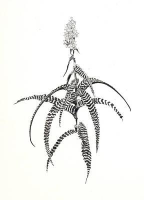 Orthophytum Gurkenii Art Print